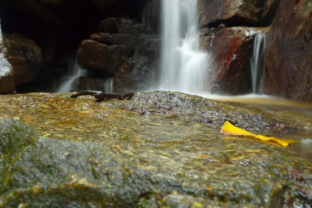 Beautiful of small waterfall flowing over the rock  in the forest. photo