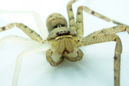 molting: Spiders are molting