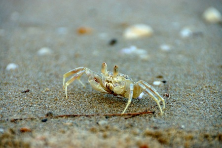 Crabs on the beach. Stock Photo - 20882618