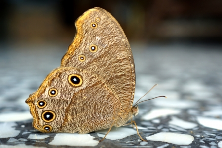 beuty of nature: Butterfly on a marble floor.