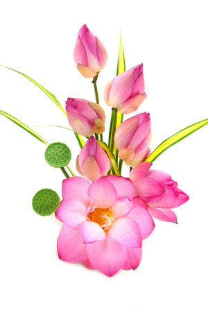 oriental flower: Flower arrangements with lotus on isolate white background. Stock Photo