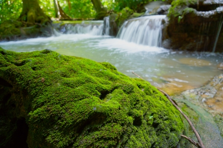 Moss on rock and waterfall in Than Bok Khorani National Park, Thailand. photo