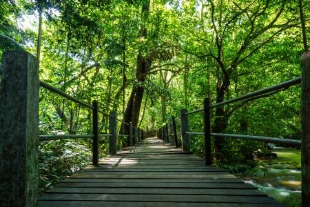 Wood bridge in national park photo
