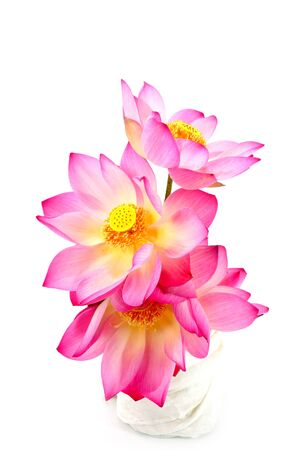 pink flower: lotus on isolate white background.