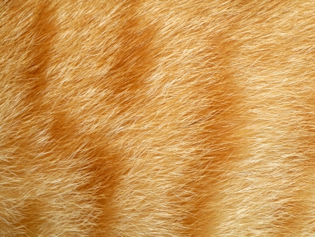 Close up of an animal colored fur texture