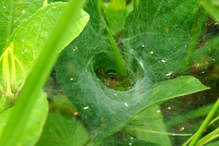 Spider lair inside of spiders photo