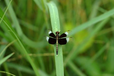 Black Dragonfly Stock Photo - 22763250
