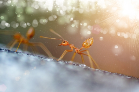 leaf cutter ant: Ants in the background bokeh.
