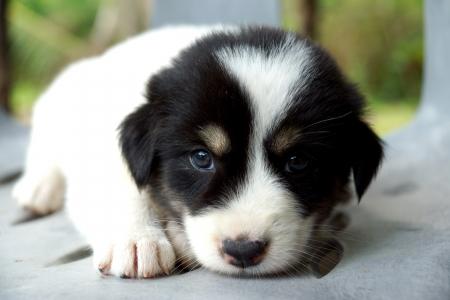 drool: Cute puppy is sleeping.