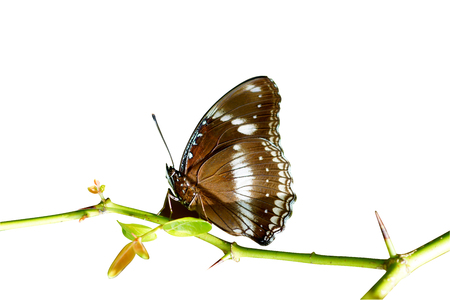 Butterfly on the branch isolated white background  photo