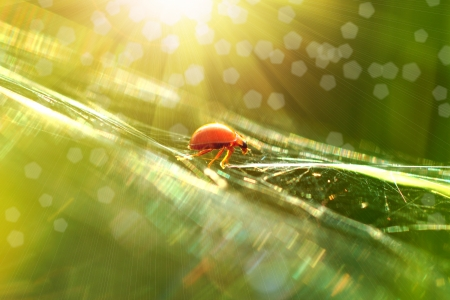 Ladybug sunlight on the field photo