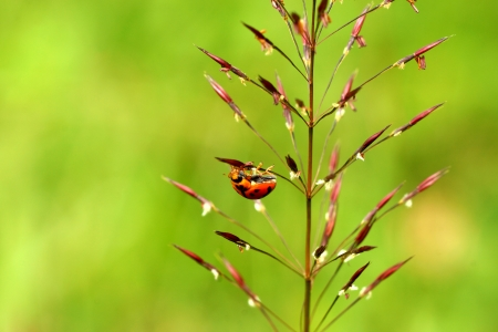 Ladybug on the field photo