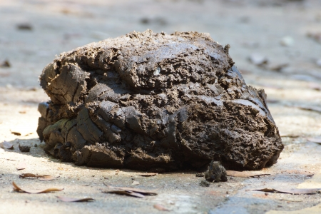 manure: cow manure on a ground.