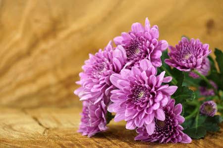 violet flower: Violet chrysanthemum on wood