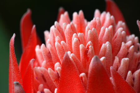 commercial tree care: Close-up of flowering bromeliads.