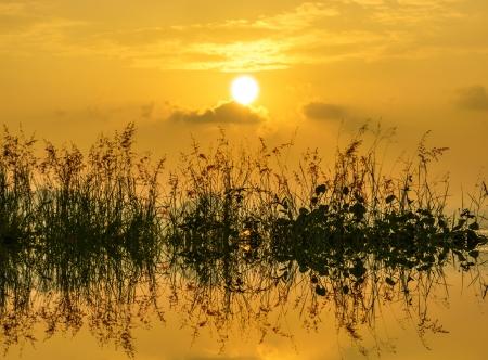 wild grass: hierba silvestre en counterlight atardecer