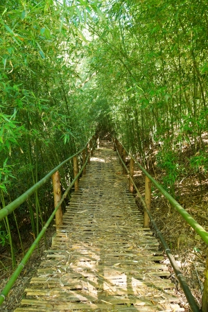 Natural corridors of bamboo forest. Stock Photo - 25160809