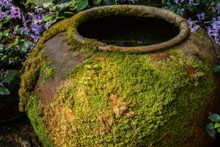 Moss on ancient pottery photo