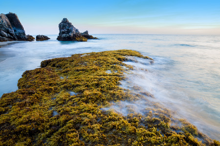 Rocks and seaweed  Sargassum sp  , Phang Nga - Thailand
