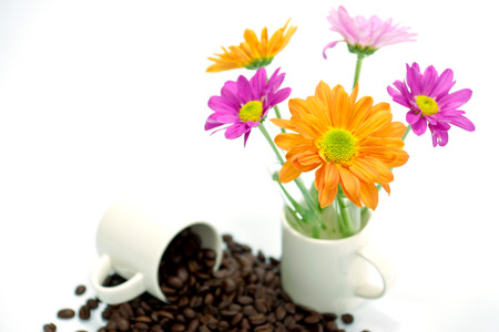 Chrysanthemum and roasted coffee beans isolated on white background. photo