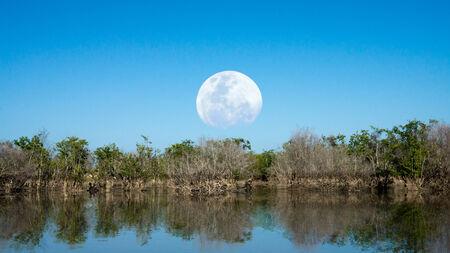degradation: Mangrove forest degradation