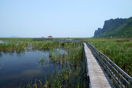 plantas acuaticas: Camino de las plantas de agua en el parque.