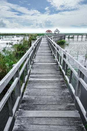 plantas acuaticas: Camino de las plantas de agua en el parque. Tailandia. Foto de archivo