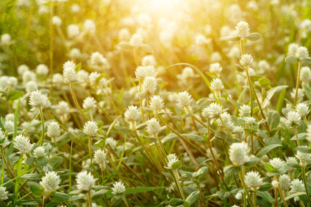 wild grass in sunset counterlight Stock Photo - 28352607
