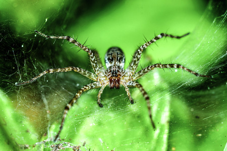 Spider on leaves and web. photo