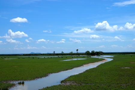 Wildlife sanctuaries of southern Thailand. Stock Photo