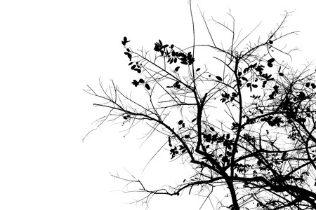 Silhouette branches photo