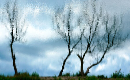 Dead trees reflected on the water surface photo
