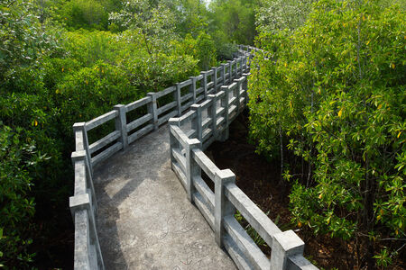 Natural mangrove walkway. Thailand travel. photo