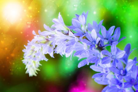 petrea volubilis: Purple Wreath, Sanpaper Vine, Queens Wreath flower. (Scientific name Petrea volubilis L.)