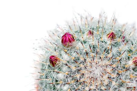 Cactus desert plant. photo