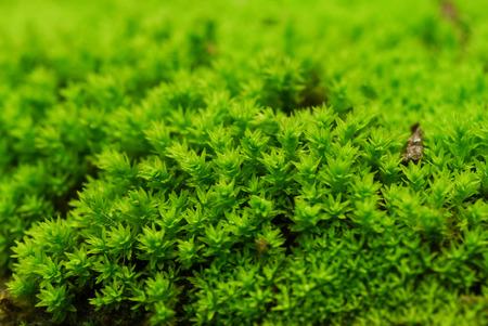 Bark and moss. photo