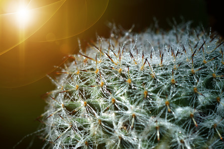 Close up of cactus spines photo
