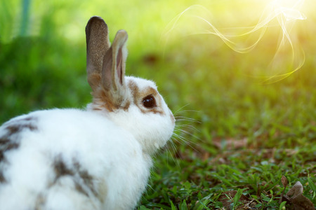 rabbit on green grass in summer day photo