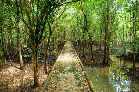 Natural mangrove walkway-Thailand travel. photo