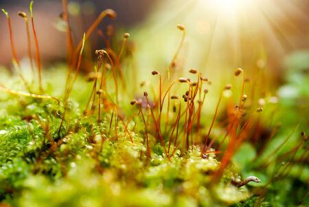 Moss flower photo