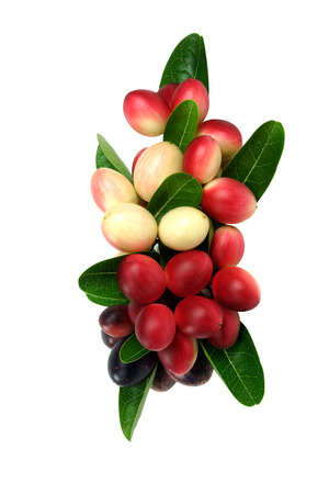 Super fruit and herbs.(Carissa carandas Linn.) photo