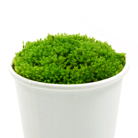 Green moss in the paper grass on a white background. photo