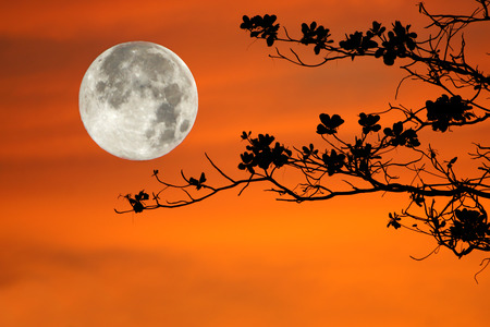 tree branches on orange background and big moon. photo
