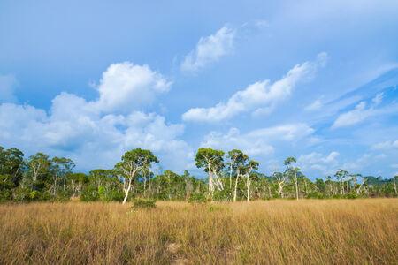 Savanna grasslands and tree, Thailand. photo