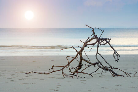 Black branches On The Beach and Andaman Sunset. photo