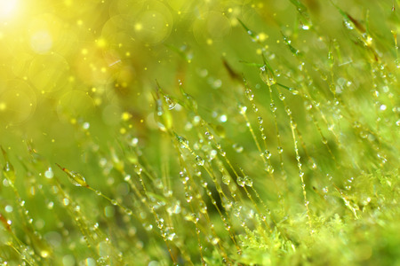 Bark and moss and drop dew. photo