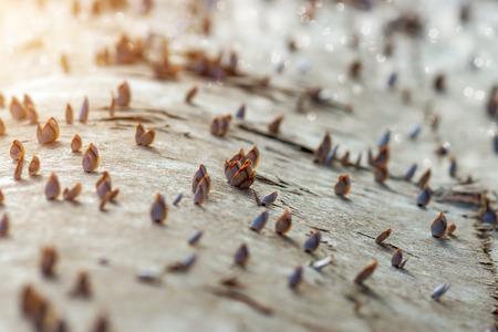 Gooseneck barnacles photo