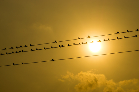silhouettes of common swallows on power lines. Stock Photo
