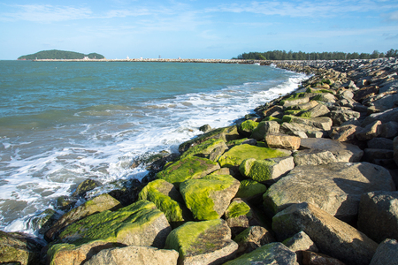 Green algae on rocks at sea. photo
