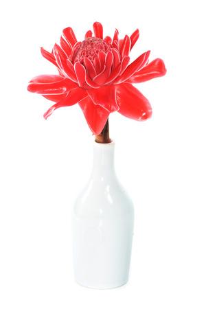 heliconiaceae: Red flower of etlingera elatior on white background.